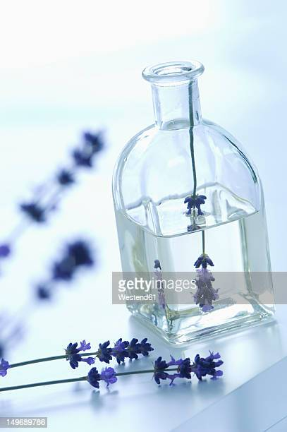 Lavender oil in bottle with flower, close up