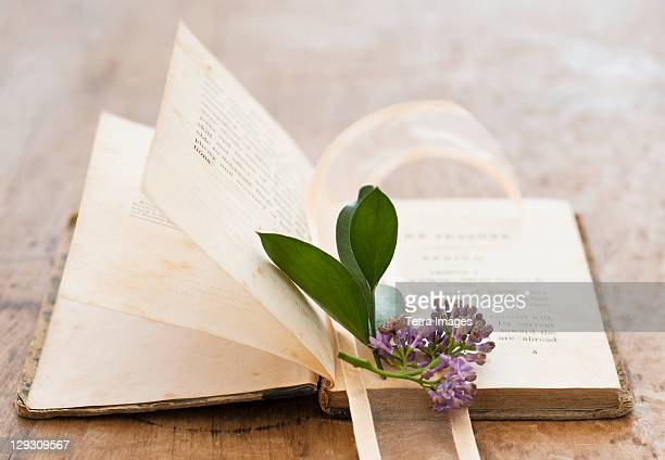 Lavender on open book