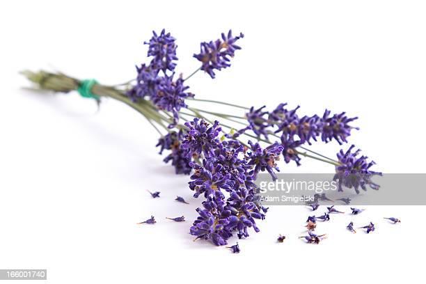 - Lavendel