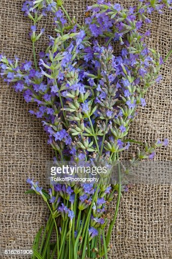 Lavender twigs on a gray wooden surface. Top view : Stock Photo