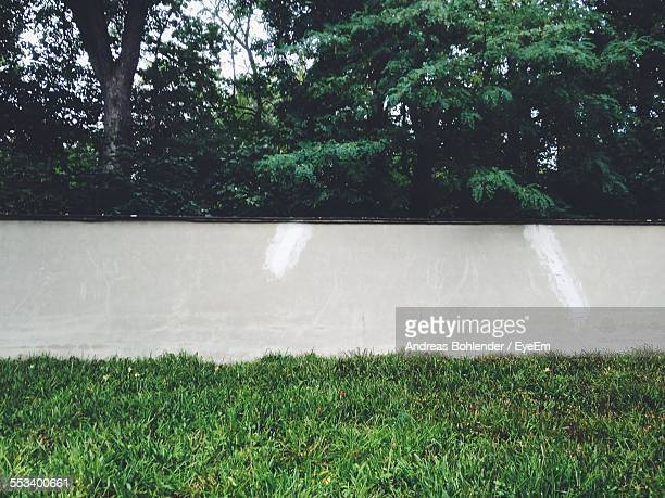 Lawn And White Wall