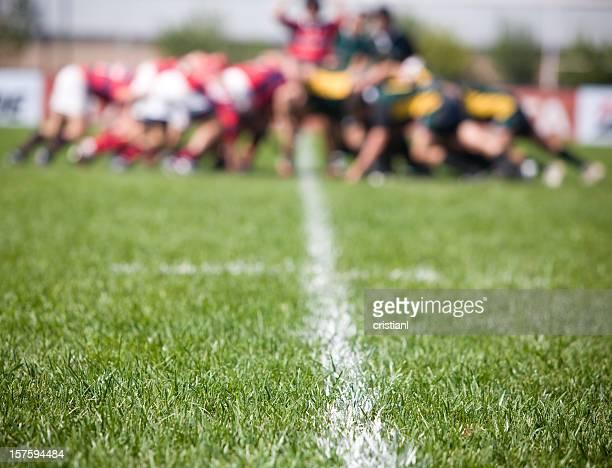 Lawn in a Field