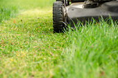 Lawn Mower and Spring Mowing