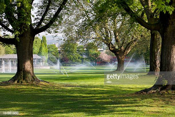 Lawn sprinklers in the park