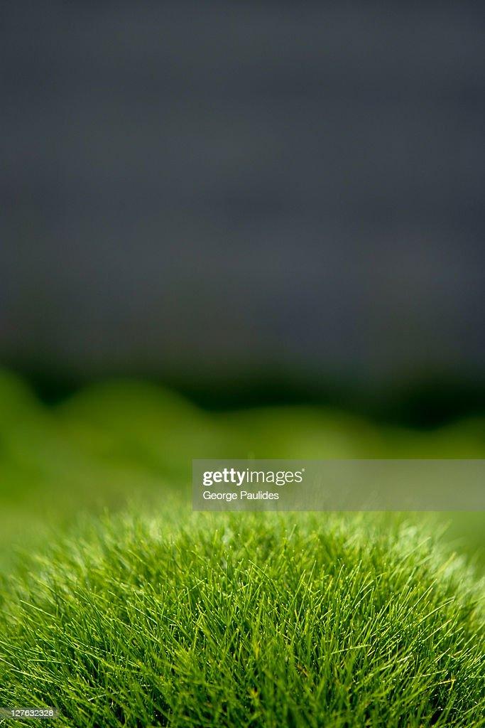 Lawn turf : Stock Photo