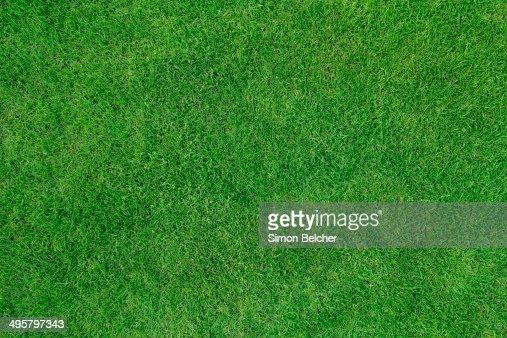 Lawn, United Kingdom
