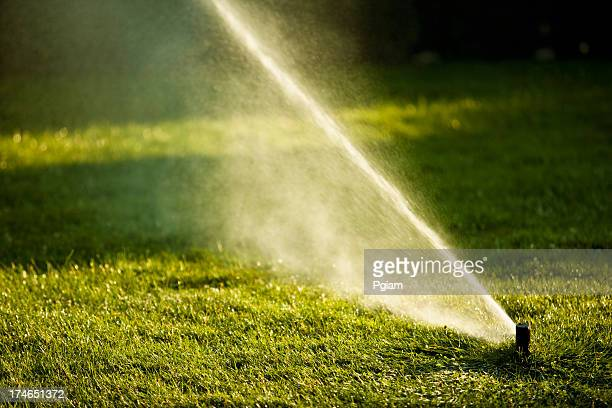 Lawn watering spray from the garden hose