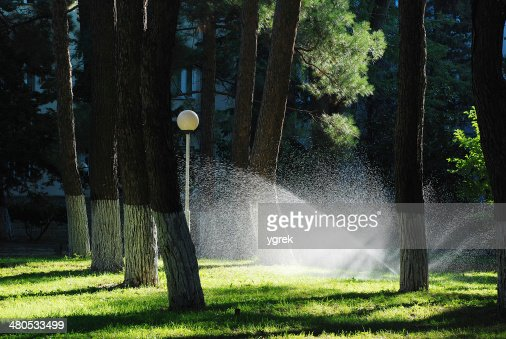 Lawn watering sprinkler : Stock Photo