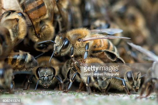 Layers of bees