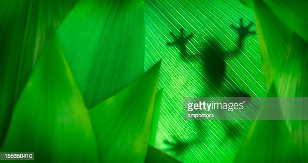 Layers of leaves with a tree frog silhouette
