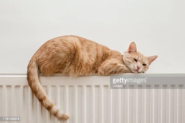 のんびりと猫