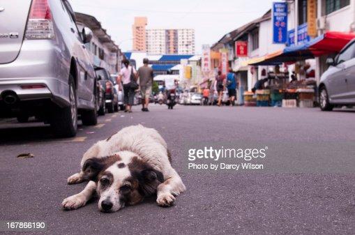 Lazy dog lying on a street
