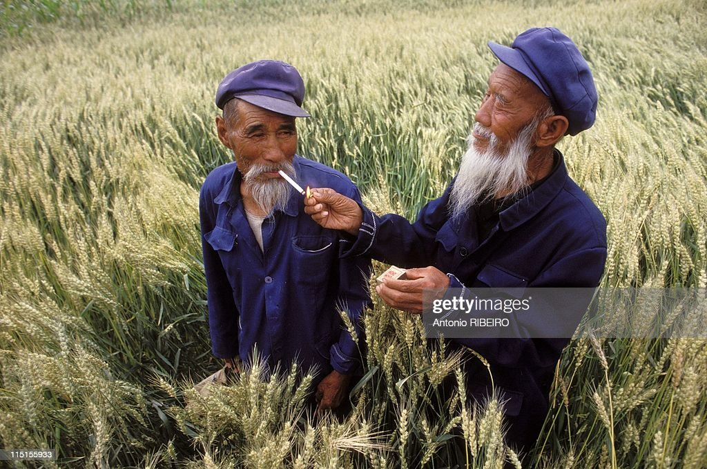 'Le Defi de la Muraille de Chine' race in China in August, 1993 - Province of Gansu. Old peasants in a wheat field.