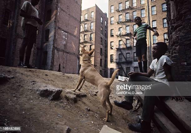 The Ghetto New York City Harlem juillet 1970 le ghetto de jeunes garçons afroaméricains jouent avec un chien sur un terrain vague entouré de ses...