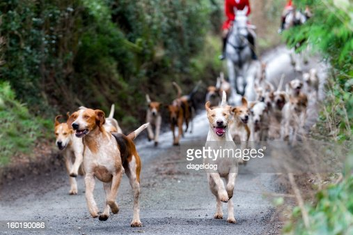 Leader of the pack : Stock Photo