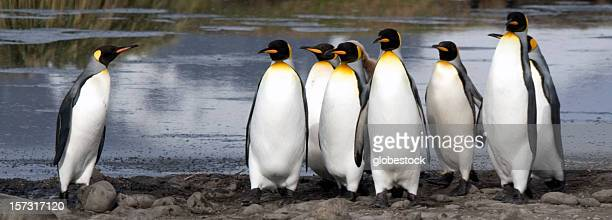 Leadership Among Penguins