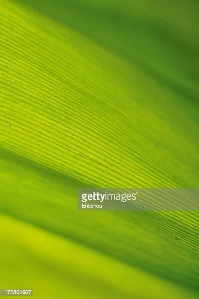 Leaf absract