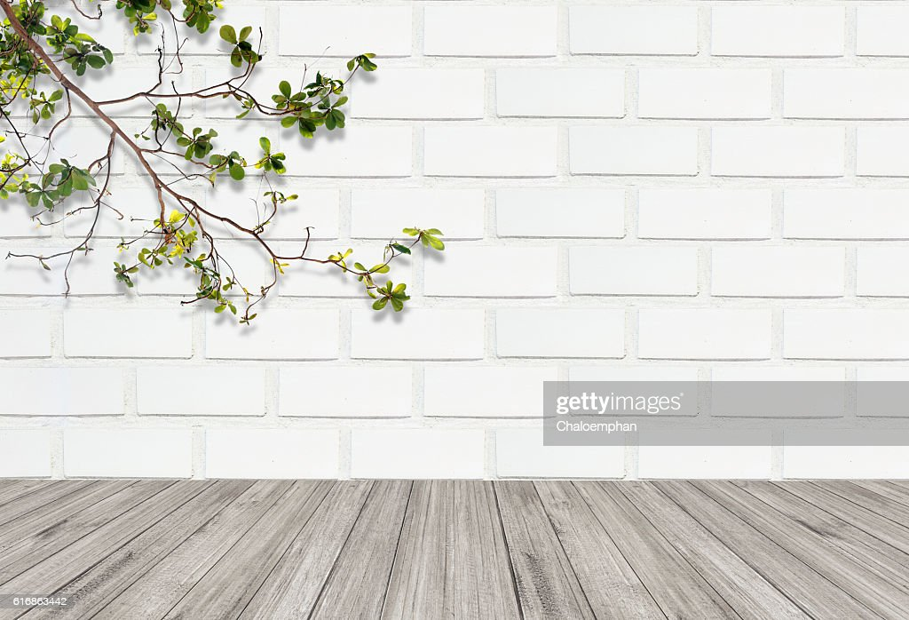 leaf against white brick wall with wooden floor : Stock Photo