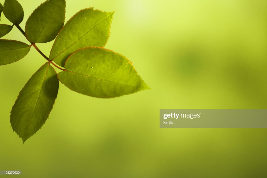 leaf background : Stock Photo
