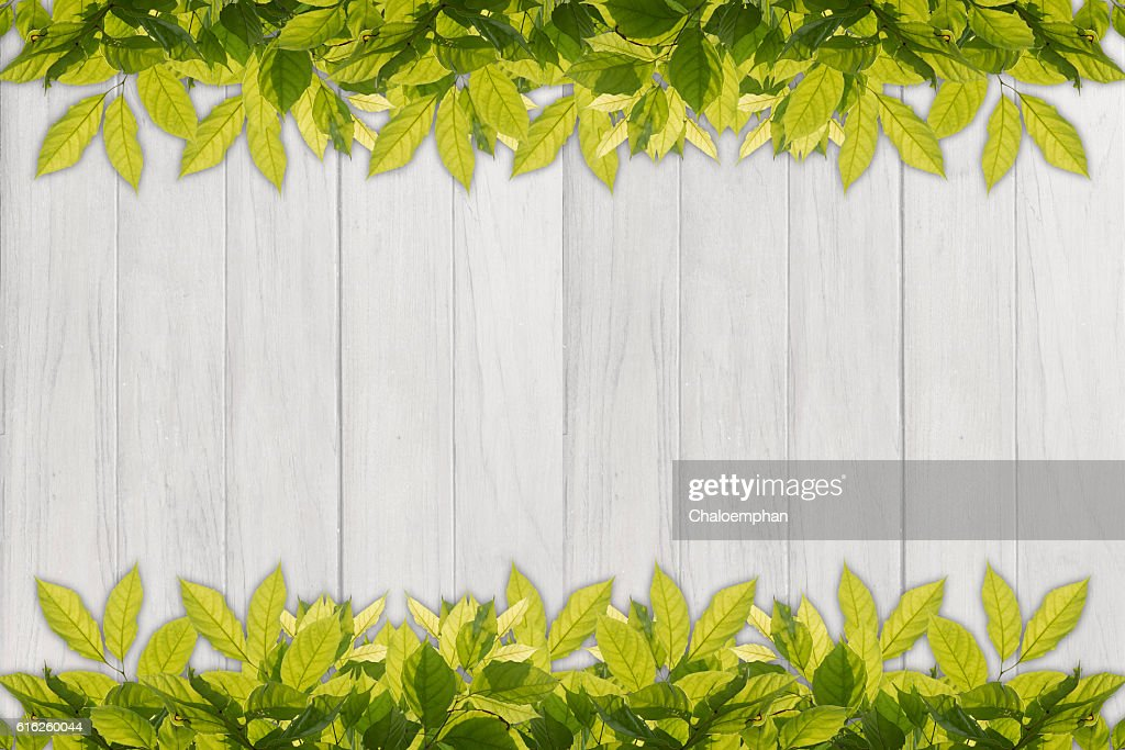 leaf border against white wood panel background : Stock Photo