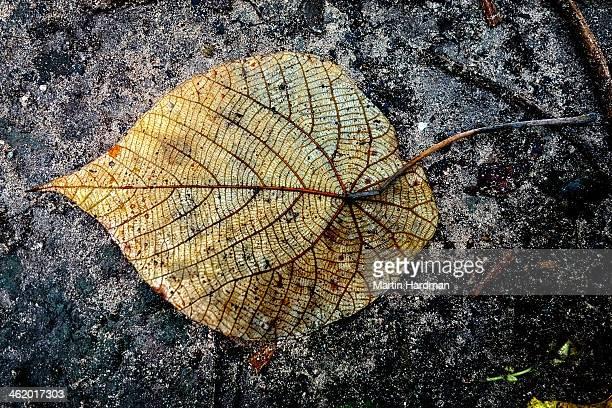 Leaf detail on sand