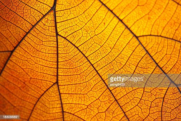 Leaf dry.