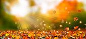 leaf fall in idyllic landscape