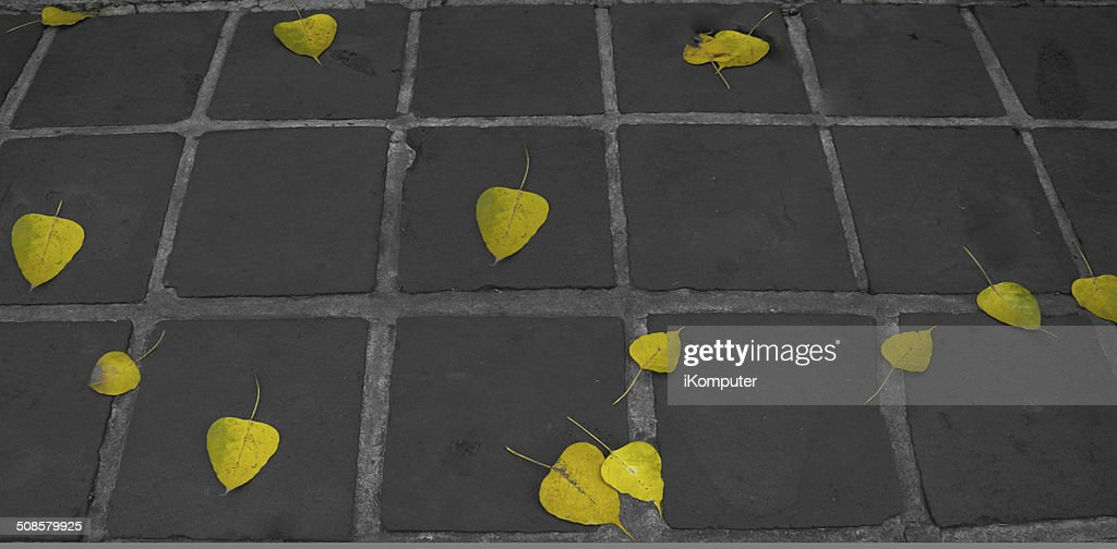 leaf fall : Stock Photo