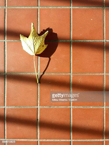Leaf Fallen On Tiled Floor