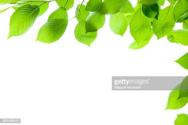 Leaf frame white background
