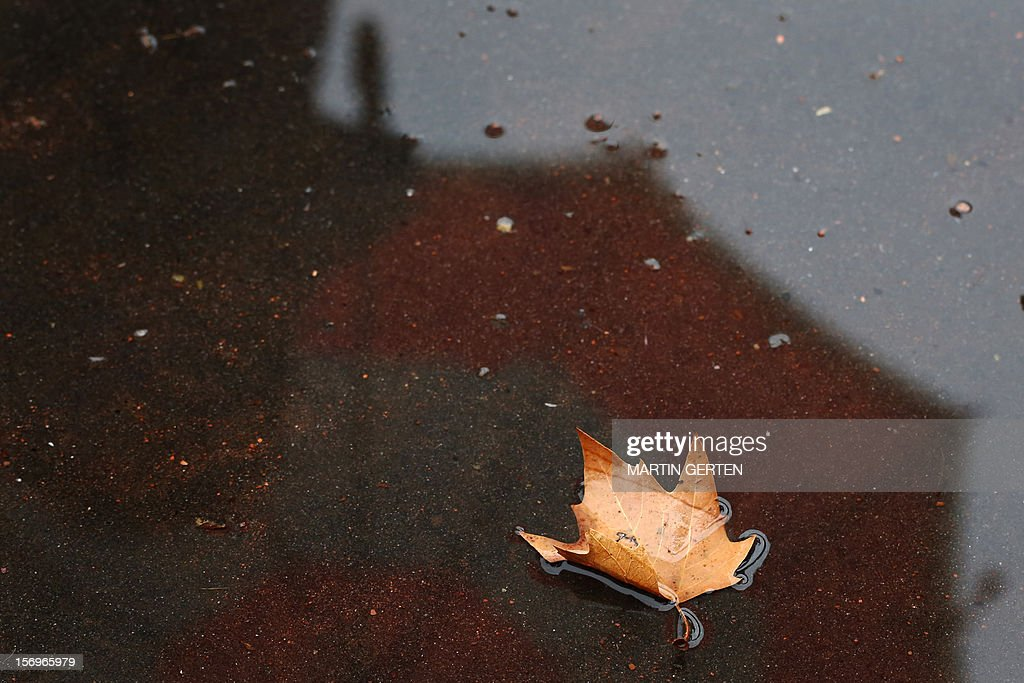 A leaf is pictuted in a puddle on November 26, 2012 in Düsseldorf, western Germany. AFP PHOTO / Martin Gerten/ GERMANY OIT