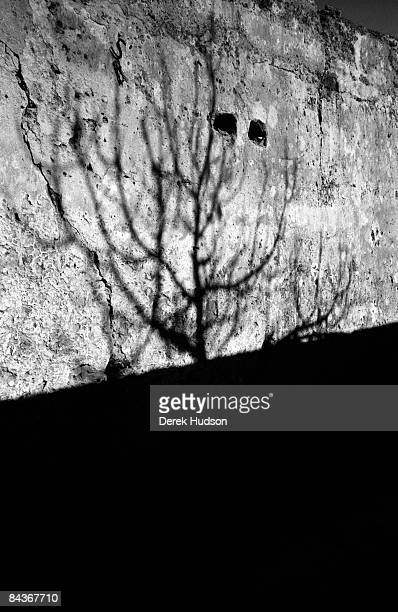 A leaf less tree casts a shadow on the wall of the kasbah