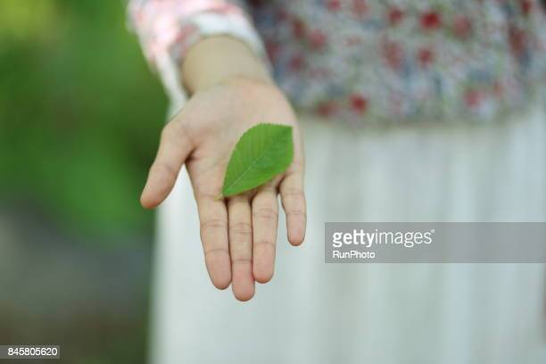 Leaf of a tree on the flat of a woman's hand