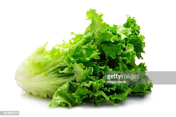Leaf of green Romaine lettuce with white background