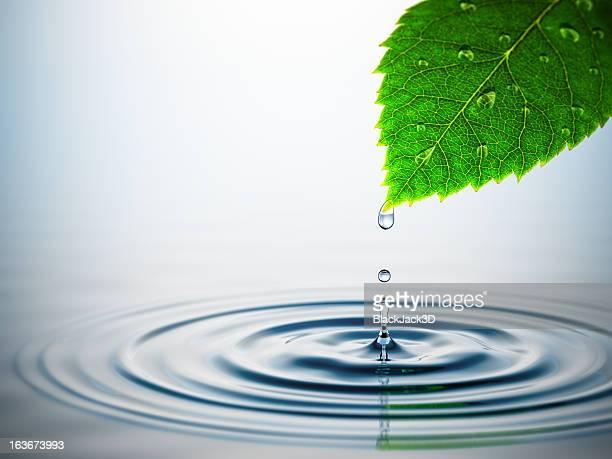 Leaf Over Water Splash