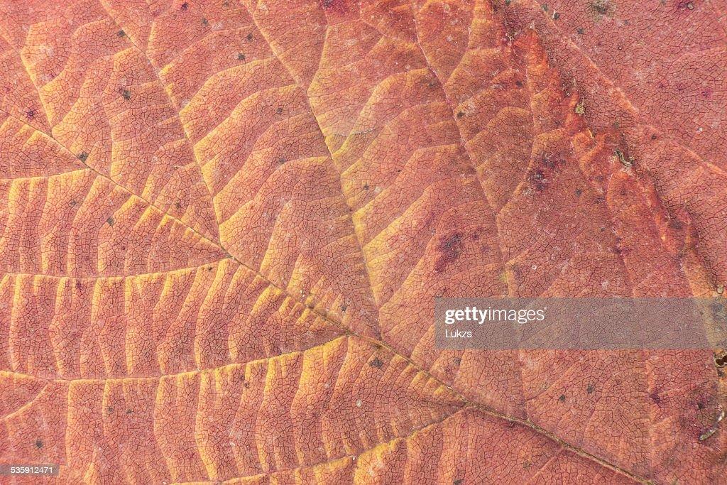 Leaf : Stock Photo