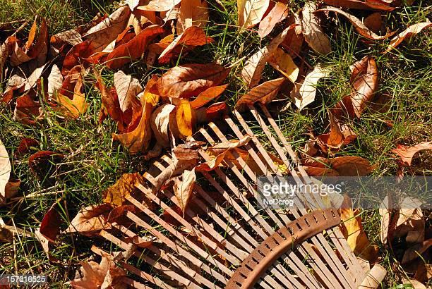 Foglia Rastrello sul prato con foglie autunnali.