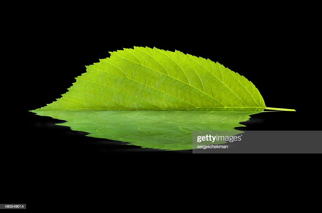 Leaf reflecting in water : Stock Photo