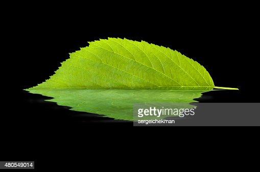 Folha reflectora na água : Foto de stock