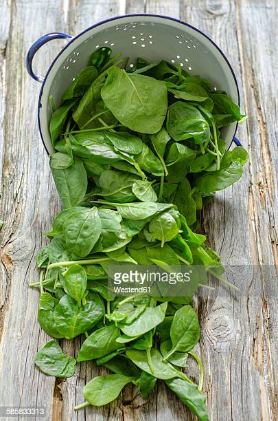 Leaf spinach and colander on wood