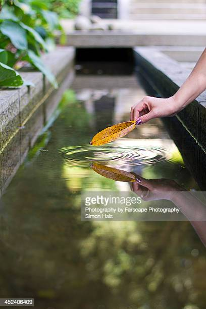 A leaf touching water with ripples