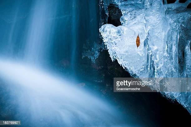 Foglia intrappolato nel ghiaccio