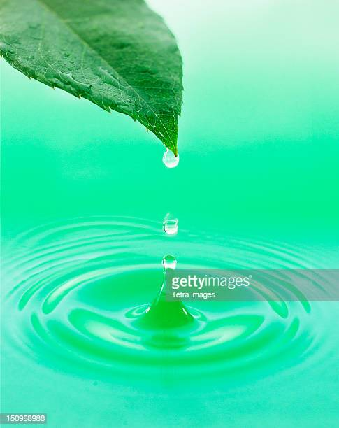 Leaf with green droplet