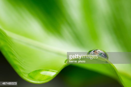 leaf with rain drop - Recovery earth concept : Stock Photo