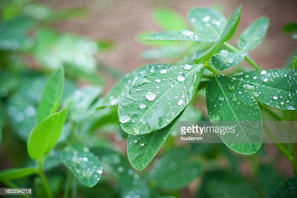 leaf with rain droplets