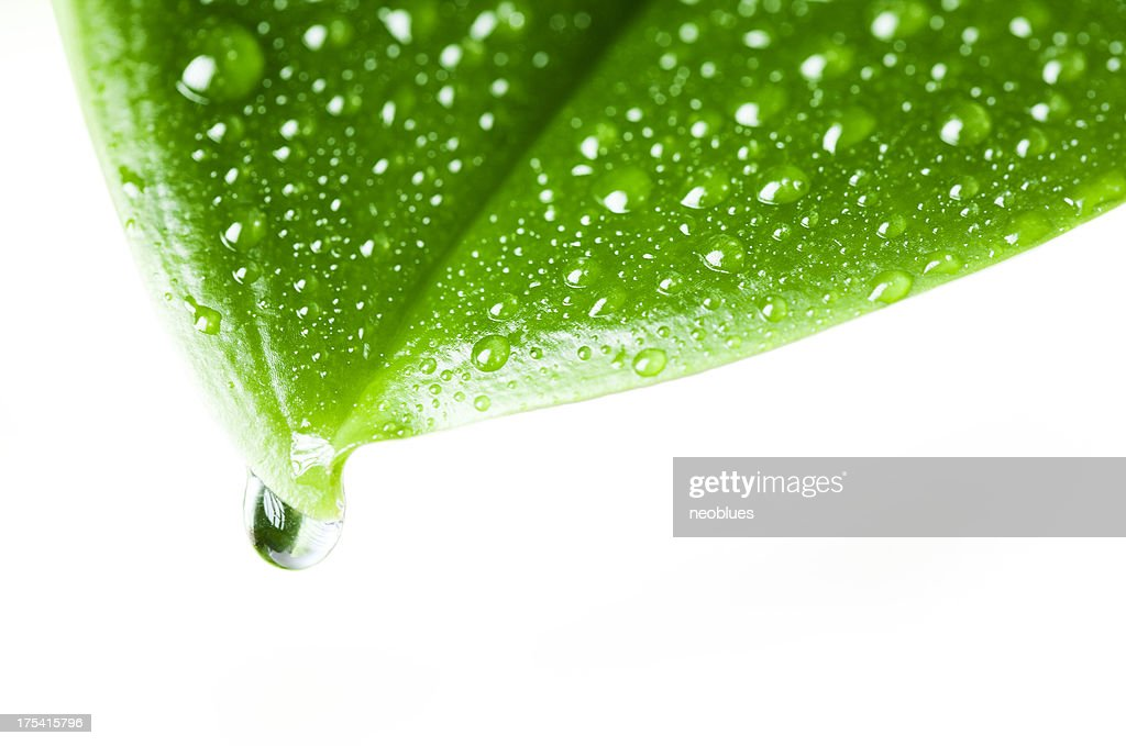 leaf with rain droplets : Stock Photo