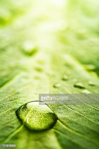 leaf with rain droplets - series