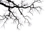 Leafless branches isolated on white background