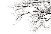 Silhouette of leafless branches isolated on white.