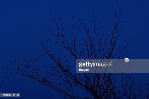 Leafless Árvore de Luar : Foto de stock